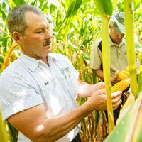 Man in field of corn