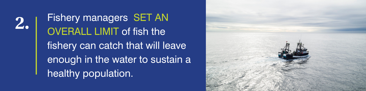 Fishery managers set an overall limit of fish the fishery can catch that will leave enough in the water to sustain a healthy population.