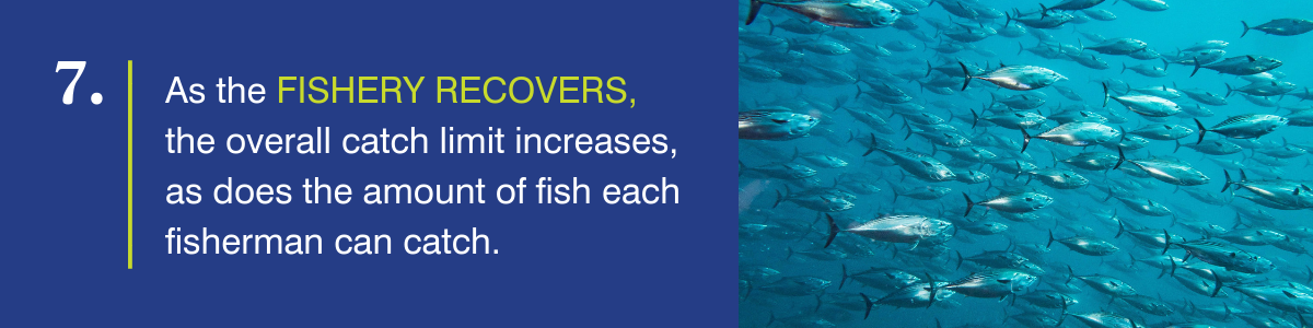 As the fishery recovers, the overall catch limit increases, as does the amount of fish each fisherman can catch.