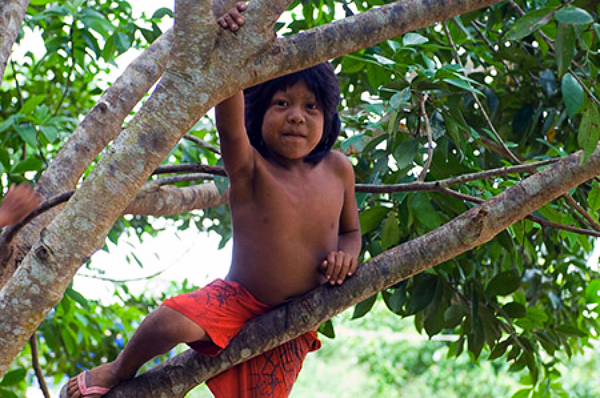 Child in a tree