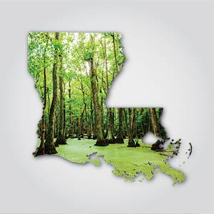 Protect Louisiana's Vital Swamp Habitat