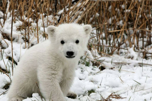 Defend the Endangered Species Act!