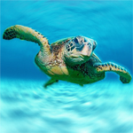 Click here for more information about Come out of your shell. Save a Sea Turtle!