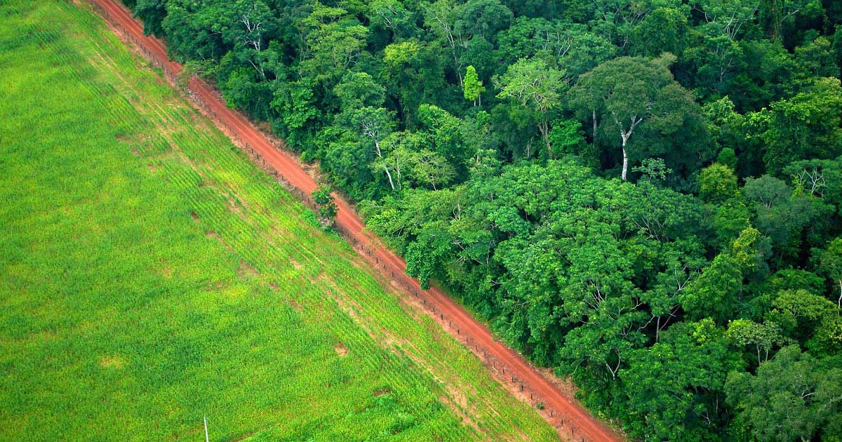 Tragedy and transformation: Deforestation in the Amazon ...