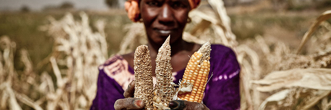 Woman with dried ears of corn