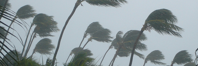 Hurricane pushing palm trees