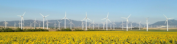 sunflowers and turbines