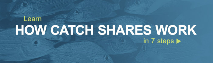 Slide 1: Learn how catch shares work in 7 steps