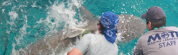 Shark in Cuba