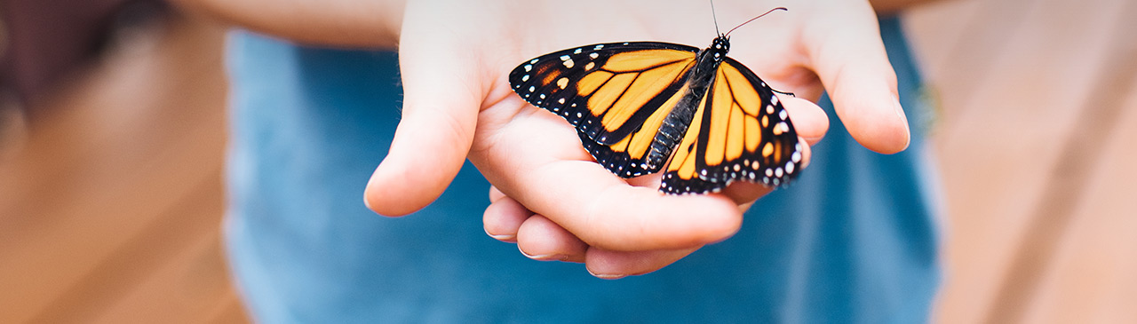 Monarch Butterfly in a Hand